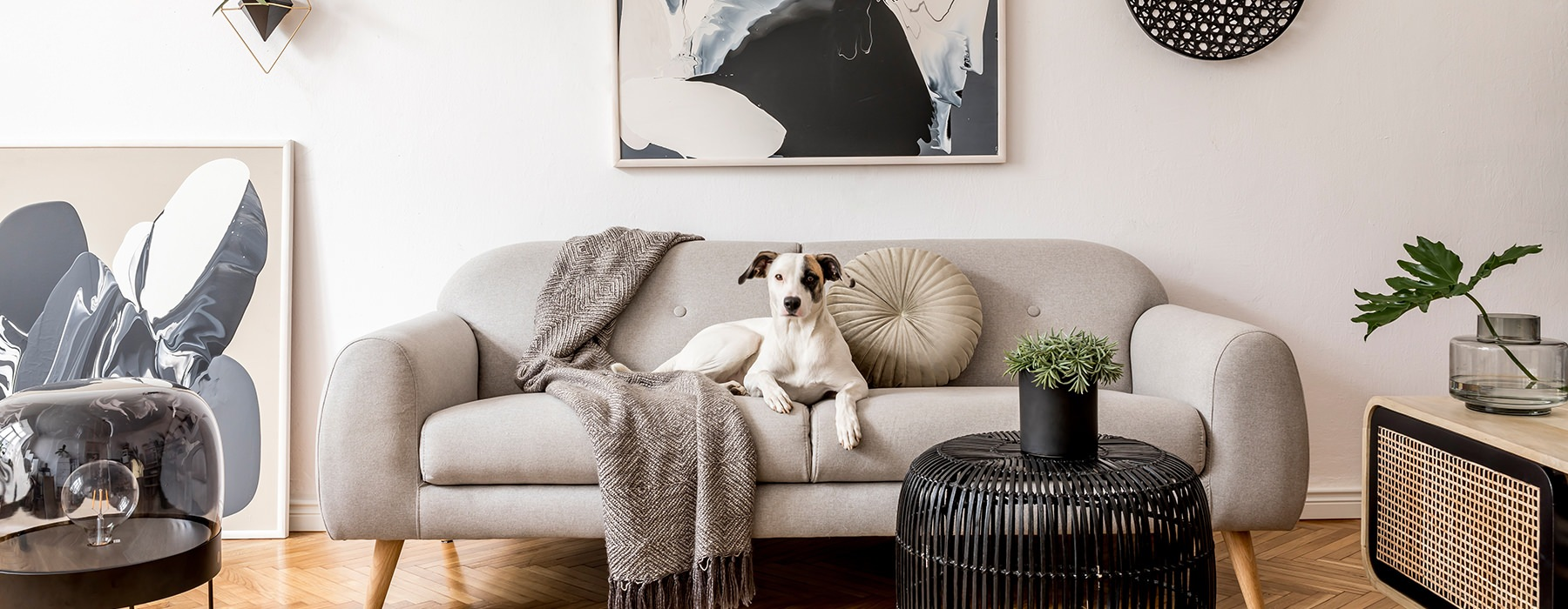 Dog sitting on a couch in a living room
